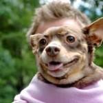 Hundpsykologi – kan forskning på hundars beteende ge svar om människan?